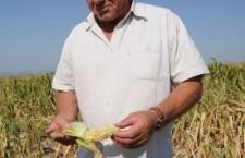 Agricultorilor care au avut de suferit din cauza calamităţilor li se reduce norma de venit din activităţi agricole