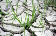 Deşertificarea – un proces climatic care avansează necontenit