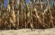 Peste 71 milioane de euro, disponibile pentru reducerea efectelor dezastrelor naturale și asigurarea producției agricole