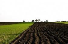 Grîul s-a semănat pe 53% din suprafaţa prevăzută