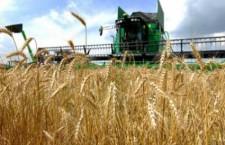 Agricultorii vor primi plafonul maxim la plata pe suprafaţă: 170 euro la hectar