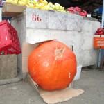 Dovleci gigant, în Piaţa din Alexandria