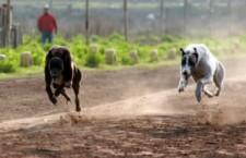Dosar penal pentru braconaj cinegetic, pentru vânătoare ilegală cu câini ogari