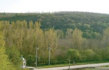Perdele forestiere de protecţie rămîn mereu un vis…