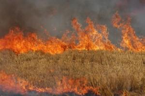 Lanuri de grâu distruse de foc