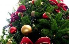 Municipalitatea îi invită pe alexăndreni la festivitatea de aprindere a bradului de Crăciun şi la Târgul de Iarnă