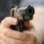 Urmărire cu focuri de armă prin Alexandria, Nanov și Buzescu – Polițiștii au urmărit un șofer ce conducea o mașină cu numere false
